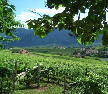 Alto Adige del Sud